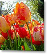 Parrot Tulips In Philadelphia Metal Print by Mother Nature