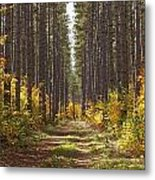 Path Into The Forest In Autumn Sault Metal Print by Susan Dykstra