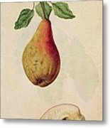 Pear   Pyrus Communis Metal Print by J le Moyne de Morgues