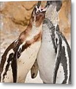 Penguin Metal Print by Tom Gowanlock