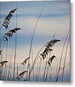 Pensacola Beach Sea Oats Metal Print by Steven Gray