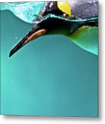 Pinguin Metal Print by Www.photo-chick.com