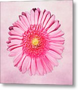 Pink Delight Metal Print by Tamyra Ayles