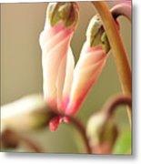 Pink Flower Bud Metal Print by Megurojin