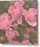 Pink Roses Metal Print by Paula Sharlea