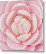 Pink Up Close And Personal Metal Print by Rich Franco