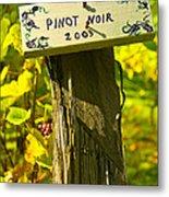 Pinot  03 Metal Print by James Rowland