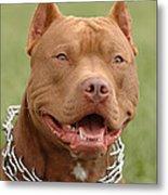 Pitbull Red Nose Dog Portrait Metal Print by Waldek Dabrowski