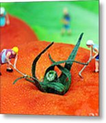 Planting On Tomato Field Metal Print by Paul Ge