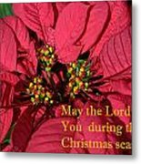Poinsetta For Christmas Metal Print by Linda Phelps