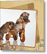 Pomeranian 1 Metal Print by Everet Regal