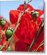 Poppy Pods Metal Print by Jane Rix