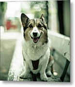 Portrait Of Dog Metal Print by Moaan