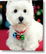 Portrait Of Puppy Metal Print by Paul L. Harwood