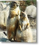 Prairie Dog Formal Portrait Metal Print by Susan Savad