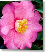 Pretty In Pink 2 Metal Print by Rich Franco