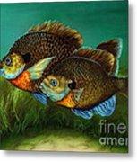 Pretty Little Panfish Metal Print by Kathleen Kelly Thompson