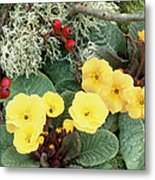 Primroses Metal Print by Archie Young