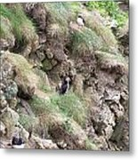 Puffins  Metal Print by George Leask