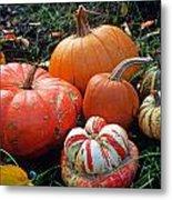 Pumpkin Patch Metal Print by Kathy Yates