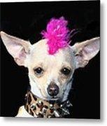 Punk Rock Chihuahua Metal Print by Ritmo Boxer Designs