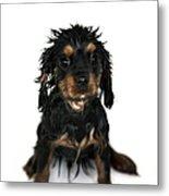 Puppy Bathtime Metal Print by Jane Rix