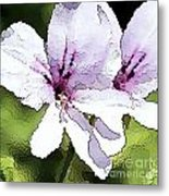 Purple Geranium Metal Print by Artist and Photographer Laura Wrede
