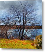 Quarry Lakes In Fremont California . 7d12636 Metal Print by Wingsdomain Art and Photography