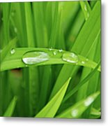 Rain Drops On Grass Metal Print by Trever Miller