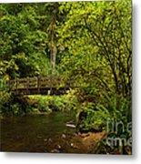 Rain Forest Bridge Metal Print by Adam Jewell