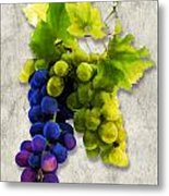Red And White Grapes Metal Print by Elaine Plesser