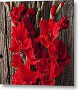 Red Gladiolus Metal Print by Garry Gay