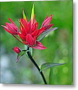 Red Indian Paintbrush Metal Print by Lisa Phillips