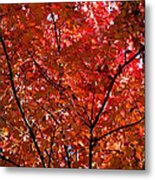 Red Leaves Black Branches Metal Print by Rich Franco