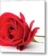 Red Rose Metal Print by Andrew Dernie