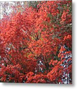 Red Tree Metal Print by Naxart Studio