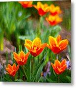 Red Tulips Metal Print by Paul Ge