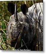 Rhino Metal Print by Tues Rahman