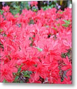 Rhodies Art Prints Pink Rhododendrons Floral Metal Print by Baslee Troutman