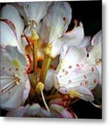 Rhododendron Explosion Metal Print by Deborah  Crew-Johnson