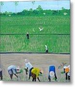 Rice Field Haiti 1980 Metal Print by Nicole Jean-Louis