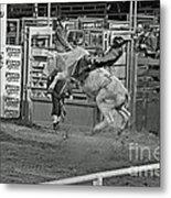 Ride 'em Cowboy Metal Print by Shawn Naranjo