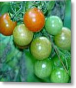 Ripen On The Vine Metal Print by Barbara S Nickerson