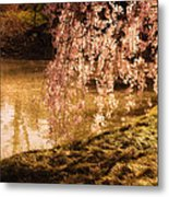 Romance - Sunlight Through Cherry Blossoms Metal Print by Vivienne Gucwa