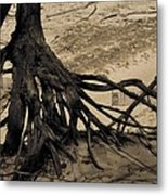 Roots Metal Print by Odd Jeppesen
