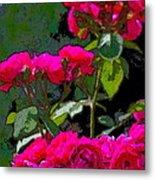 Rose 135 Metal Print by Pamela Cooper