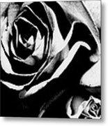 Roses Study 1 Metal Print by Lisa  Spencer