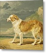 Rough-coated Collie Metal Print by James Ward