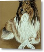 Rough Collie Metal Print by Patricia Ivy