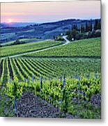 Rows Of Grapevines At Sunset Metal Print by Jeremy Woodhouse